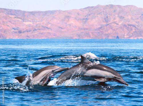 Foto op Canvas Dolfijn Double Dolphin