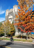 cyclist in front of college building with autumn oak tree poster