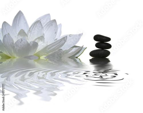 Papiers peints Fleur de lotus l'instant zen