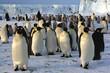 Colonie de manchots empereurs à Cap Washington (Antarctique)
