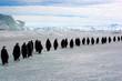 Longue marche des Empereurs  (Antarctique)