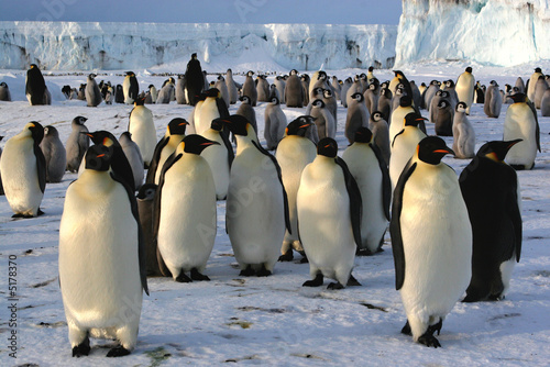 Papiers peints Antarctique Colonie de manchots empereurs à Cap Washington (Antarctique)