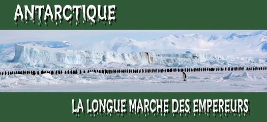 Grande marche des Empereurs (Antarctique, Mer de Ross)