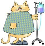 Sick Cat poster