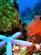 composition florale sous marine