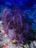 Fototapety algue en plongée