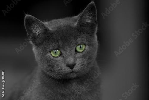 Petit chat gris aux yeux verts photo libre de droits sur la banque d 39 images - Yeux vert gris ...