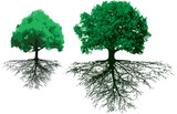 Fototapety trees with roots