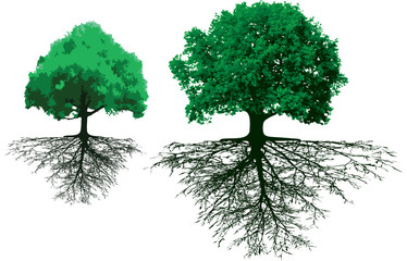 trees with roots