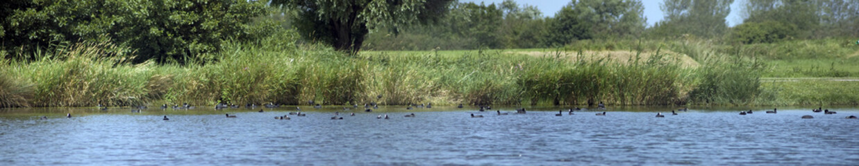 Panoramique étang canards