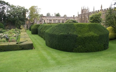 hedge/yew hedge in garden in front of castle & church