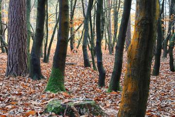 autumn forest wild