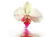 fragile orchidée poster