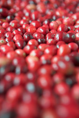 Cranberries everywhere!