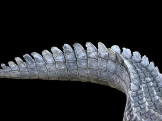Tail of the Crocodile