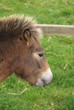 head of a pony