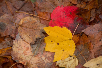 Yellow and red leaves on the ground