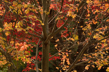 Autumn colored leaves in forest
