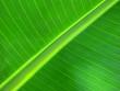 diagonale de feuille de bananier