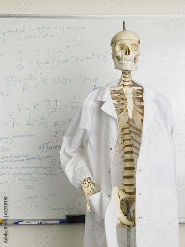 Skeleton in Front of Whiteboard in Classroom