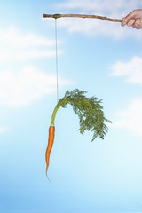 Man dangling carrot from stick, close-up of hand