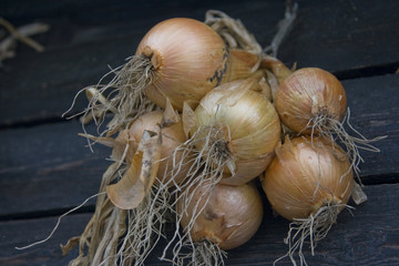 French market onions