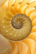 Nautilus Shell Detail
