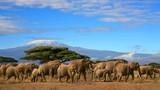 Kilimanjaro With Elephant Herd