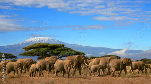 Canvas Overige Kilimanjaro With Elephant Herd