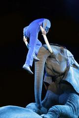 elefante con persona