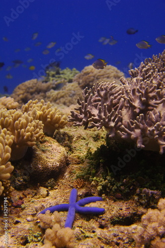 Underwater landscape and starfish
