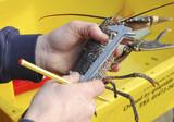 Lobster conservation poster