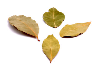 Four bay leafs