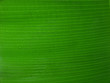 texture de feuille de bananier
