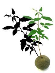 arbre miniature sur galet