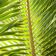Close up of palm frond.