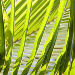 Close up of palm fronds.