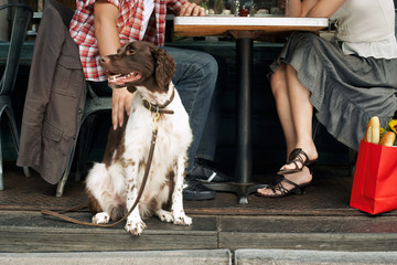 Dog with owners at sidewalk cafe
