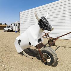 Practice lasso cow dummy.