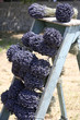 Bouquet de Lavande en Provence