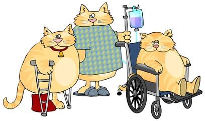 Sick Cats