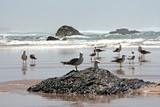 Seagulls at the atlantic ocean in Portugal poster