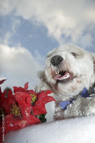 dog under the sky