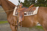 Western saddle on mount ready to go in closeup poster