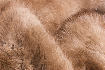 Closeup of a mink fur.  Delicately patterned and luxurious.