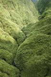 Maui Rainforest. poster