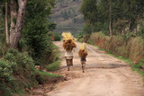Malagsy people carrying loads of straw on their heads poster