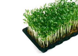 Garden cress in tray close-up isolated on white