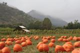 Landscape orientation of a pumpkin patch in October poster