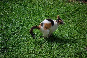 defecating cat